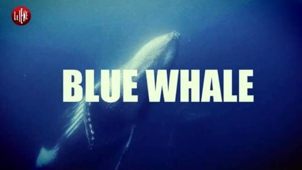 Blue Whale, video de Le Iene fake o realtà?