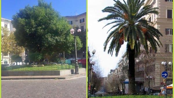 Vomero, piazza Vanvitelli, lauro e palma-3