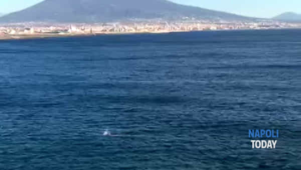 Tuffo a mare di dicembre a Napoli: il video dei nuotatori coraggiosi