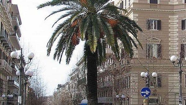 Vomero, piazza_ Vanvitelli_con_la_palma-2